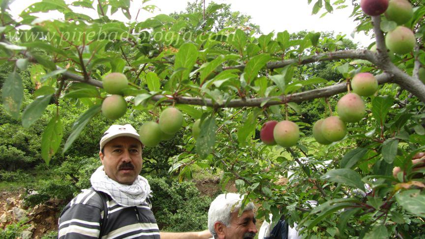 فارسیان / گروه پیاده روی قائم